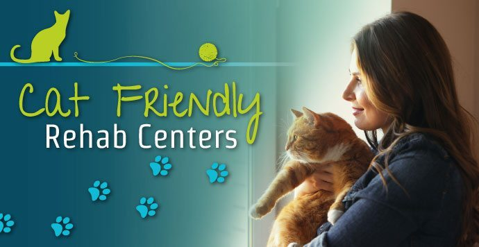 Cat-Friendly-Rehab-Center