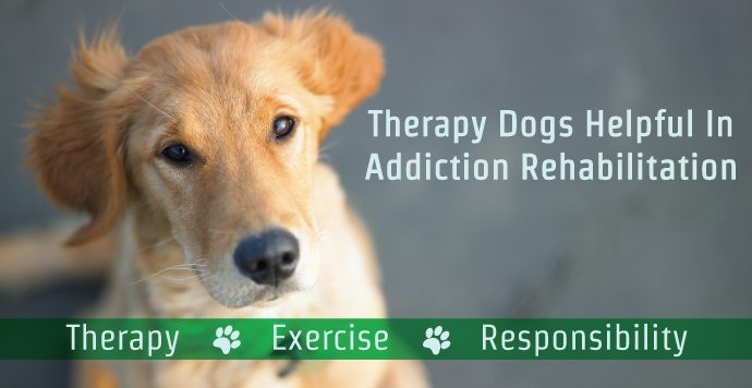 Therapy Dogs Helpful In Addiction Rehabilitation